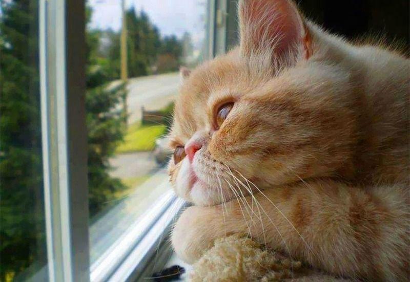 chat-roux-triste
